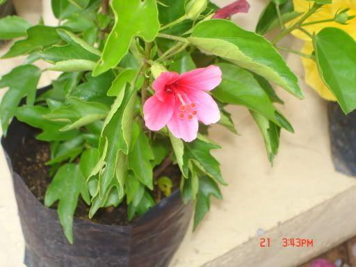 Contoh Teka Teki Bunga Raya Yang Meletup Untuk Guru-guru