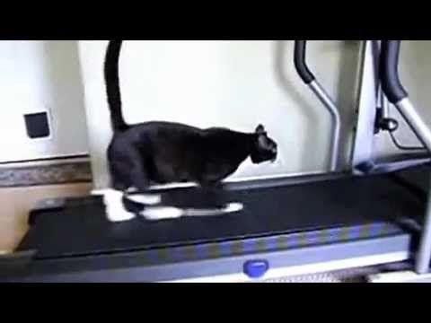 Contoh Teka Teki Kucing Yang Bermanfaat Untuk Ibubapa