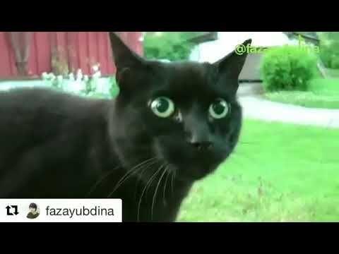 video eta terangkanlah versi kucing ngakak
