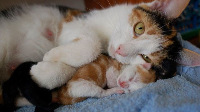 my cat snuggling her day old kittens 1 jpg