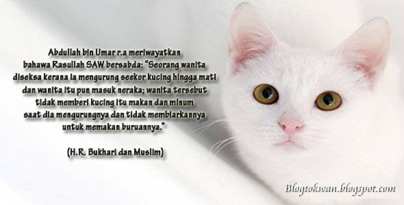 kebenaran islam mengenai kucing