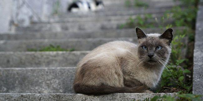 lupakan teka teki dress putih emas sekarang tebak kucing ini naik atau turun tangga