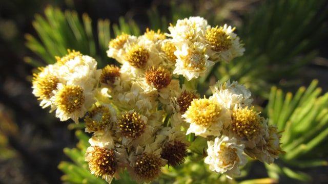 Contoh Teka Teki Bunga Apa Yang Disiram Mati Yang Terbaik Untuk Para Guru