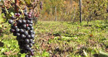 Download Dskp Dunia Sains & Teknologi Tahun 2 Bermanfaat Kilang Anggur Hakkenzan Dibuka Pada Tahun 2011 Di Kaki Gunung