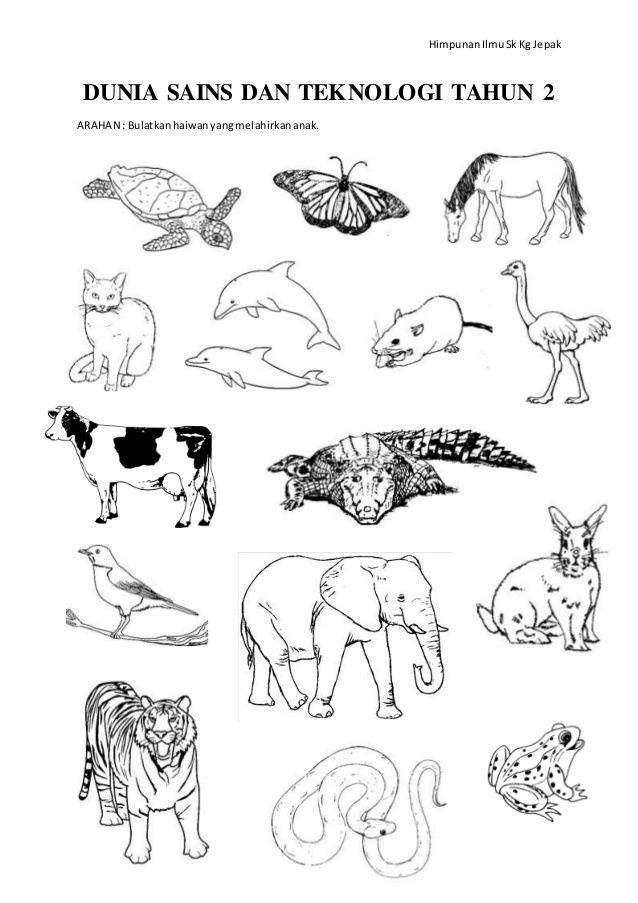 latihankuiz jenis pembiakan haiwan tahun2 1 638 jpg cb 1404409939
