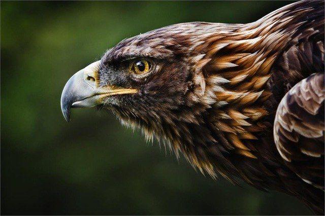 bingkai diy keren ganas eagle elang poster hewan dan cetak rumah dekor seni sutra poster kain