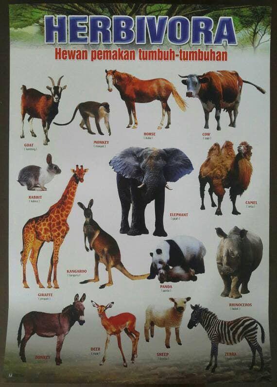 poster hewan pemakan tumbuh tumbuhan