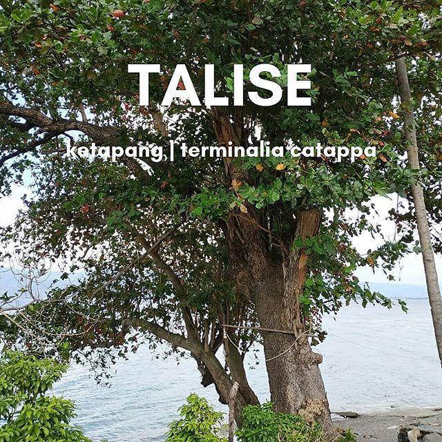 di lembah palu orang orang menyebutnya talise yang adalah juga nama kelurahan di pesisir timur teluk