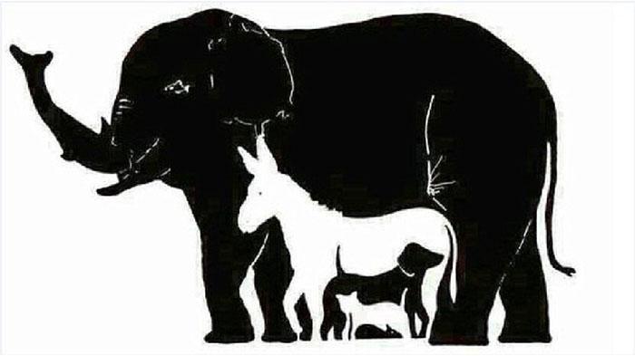 bikin pusing anda bisa lihat berapa binatang di gambar ini