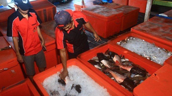 jadi sentra perikanan ternyata derawan belum punya tempat pelelangan ikan