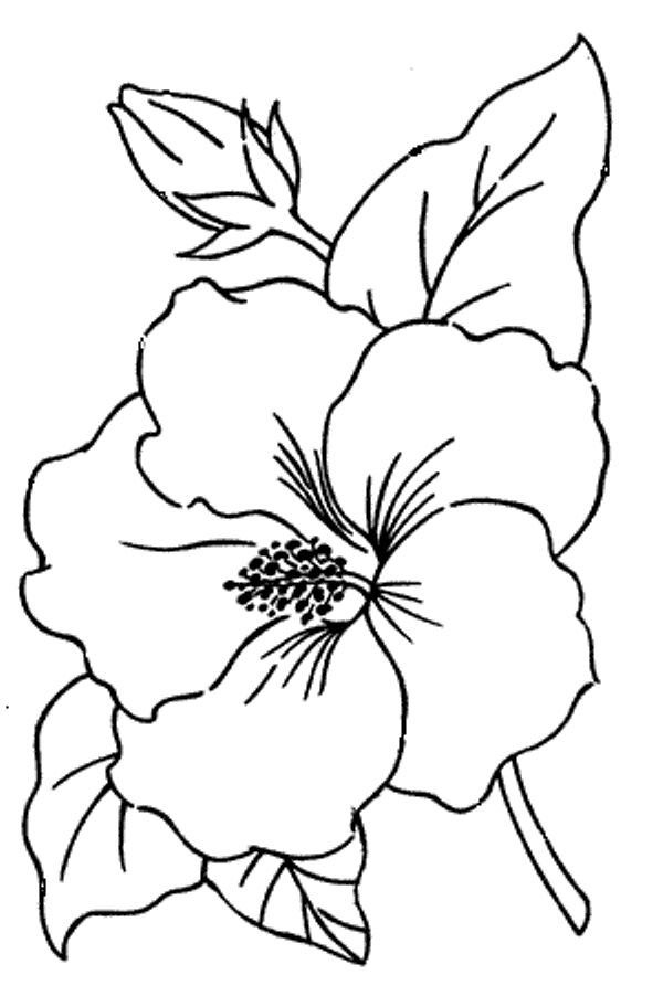 19 photos of bunga raya coloring pages best of a hibiscus stock vector alamy