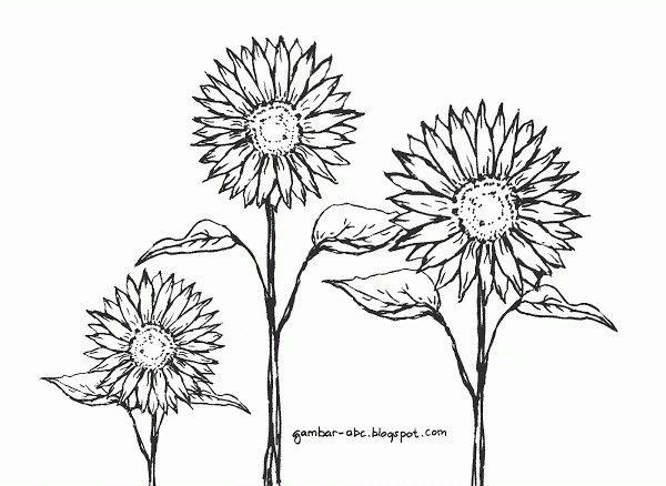 19 photos of bunga matahari coloring pages inspirational contoh gambar mewarnai gambar bunga matahari
