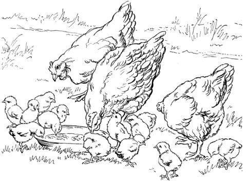 muat turun gambar mewarna ayam yang berguna dan boleh di dapati