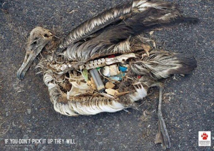 dampak pencemaran air bagi kehidupan